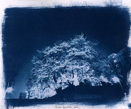 Yozakura2012_edited1